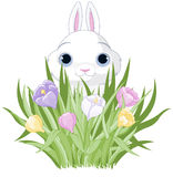 Easter Bunny with crocus bouquet Stock Photography