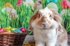 Easter bunny, cute rabbit with a basket of Easter eggs royalty free stock photos