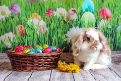 Easter bunny, cute rabbit with a basket of Easter eggs royalty free stock photo