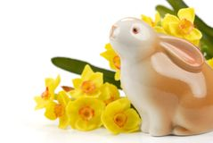 Easter bunny and daffodil Stock Photo