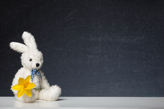 Easter Bunny with Daffodil before a Blackboard Stock Photo