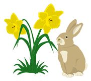 Easter Bunny with daffodils. Illustration of a cute bunny with two daffodils on white background Royalty Free Stock Photography