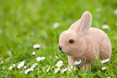 Easter bunny with daisies Royalty Free Stock Photo