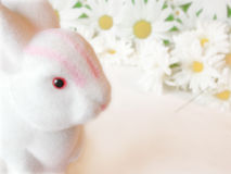 Easter bunny among daisies. White easter rabbit among the daisies royalty free stock photos