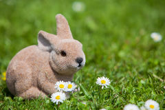 Easter bunny between daisies Stock Image