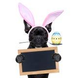 Easter bunny dog Stock Photography