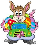 Easter bunny driving car Royalty Free Stock Image