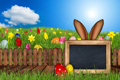 Easter bunny ears behind meadow blackboard Royalty Free Stock Images