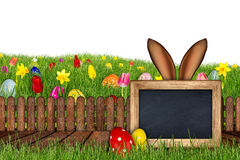 Easter bunny ears behind meadow blackboard Stock Images