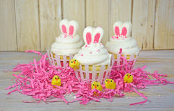 Easter bunny ears on cupcakes Stock Photography