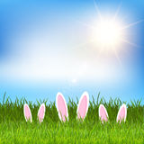 Easter bunny ears hidden in grass vector illustration