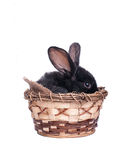 Easter bunny in an Easter Royalty Free Stock Photography