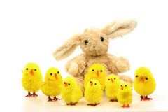 Easter bunny with easter chicks Stock Photography