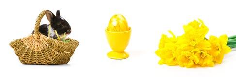 Easter Bunny, Easter Egg, daffodils Stock Photography
