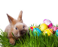 Easter bunny and Easter eggs. On green grass