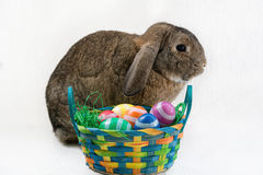 Easter bunny and Easter eggs Stock Photo