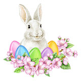 Easter Bunny with Easter Eggs in Cherry Blossom. Watercolor illustration Royalty Free Stock Photo