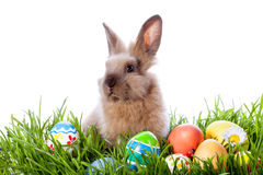 Easter bunny and Easter eggs Stock Photography