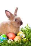 Easter bunny and Easter eggs stock images