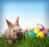 Easter bunny and Easter eggs royalty free stock photography