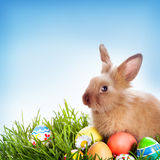 Easter bunny and Easter eggs Royalty Free Stock Photos