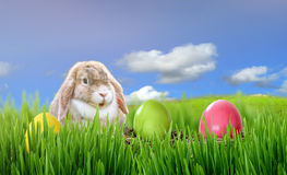 Easter bunny and Easter eggs on green grass. Blue sky Royalty Free Stock Photo