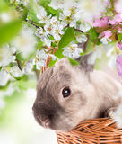 Easter bunny and Easter eggs on green grass Stock Photos