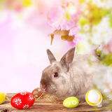 Easter bunny and Easter eggs on green grass Stock Photography