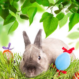 Easter bunny and Easter eggs on green grass Royalty Free Stock Images