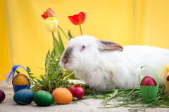 Easter bunny, Easter eggs and tulips Royalty Free Stock Photography