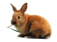 Easter bunny eating Stock Photo