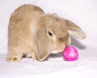 Easter bunny with egg Royalty Free Stock Image