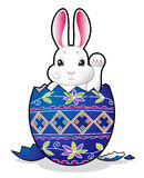 Easter bunny in the egg Royalty Free Stock Photos