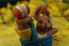 Easter Bunny in a Blue Basket royalty free stock photo