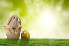 Easter bunny with egg on grass. Image of Easter bunny on the pot with Easter egg on grass, shot with bokeh background Royalty Free Stock Photo