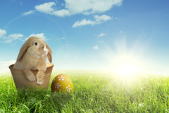 Easter bunny with egg on meadow Royalty Free Stock Photos