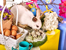 Easter bunny and egg. Rabbit among spring holiday flowers. Stock Photography