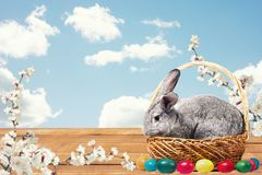 Easter bunny with eggs in a basket royalty free stock images