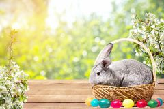 Easter bunny with eggs in a basket royalty free stock photo