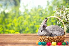 Easter bunny with eggs in a basket royalty free stock photos