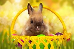 Easter bunny with eggs in a basket. Easter greeting card with bunny, grass and eggs in nest Royalty Free Stock Photography