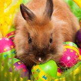 Easter bunny with eggs in a basket. Easter greeting card with bunny, grass and eggs in nest Stock Photo