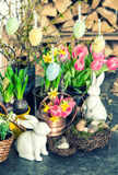 Easter bunny and eggs decoration. Spring flowers tulips, narciss Stock Image
