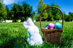 Easter bunny with eggs in field Stock Image