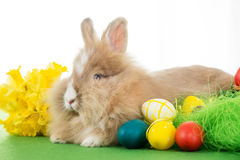 Easter Bunny Stock Photography