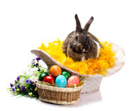 Easter bunny eggs and flowers Royalty Free Stock Photos