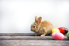 Easter bunny and Easter eggs on gray background Colorful eggs and little rabbit sitting on wooden decorated in festive royalty free stock images