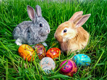 Easter bunny with eggs on green grass. Easter bunny green grass eggs Royalty Free Stock Photos