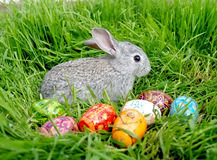 Easter bunny eggs stock photography