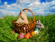 Easter bunny eggs on green grass stock photos